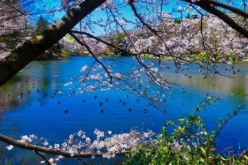 Пруд в парке Мацуикэ