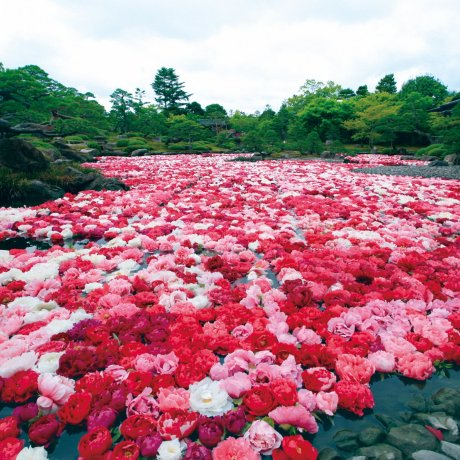 足立美術館與日本庭園由志園