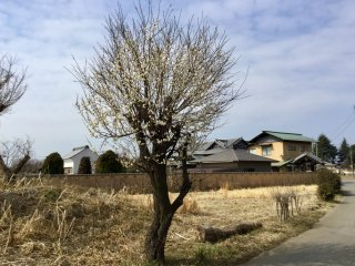 A time warp on the country road leading to Shinkoji