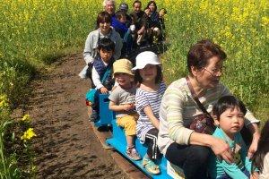 Đi tàu mini SL uốn quanh những bông hoa cải dầu