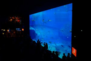 The Kuroshio Sea viewing room is nothing short of spectacular