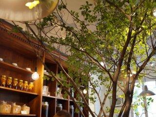 Một chiếc tủ gỗ óc chó dài 7 mét xếp thành hàng, và ở giữa bàn dài 5 mét là - bạn nên tin - một cái cây.
