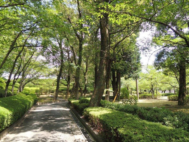 ในฤดูร้อนเส้นทางเดินรายล้อมไปด้วยแมกไม้สีเขียว