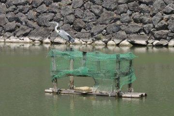 นกกระสายืนพักอยู่ที่กำแพงปราสาท