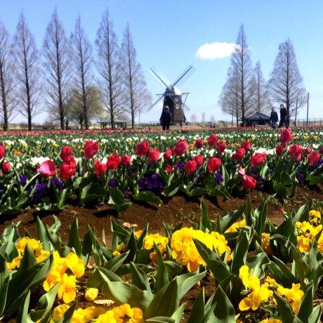 Taman Agrikultur Akebonoyama