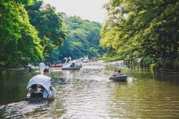 Paddling boats at Inokashira Park