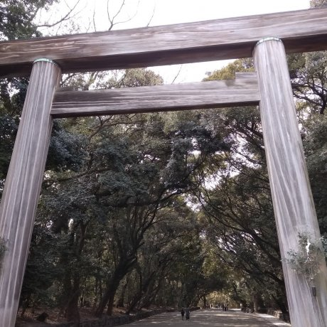 Atsuta Jingu's Arboreal Splendor