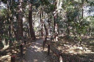 Arboreal splendor