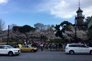 สวนคิทะโนะมะรุในฤดูใบไม้ผลิ