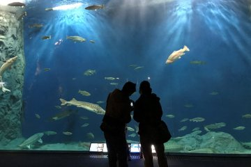 Come face to face with fish from the North Pacific