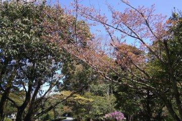 Garden entrance to Naiku