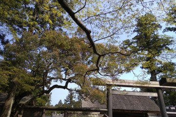 The Grandness of Ise Jingu
