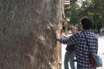 Tree prayers at Geku