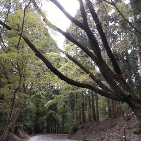 Kasuga Forest, Nara