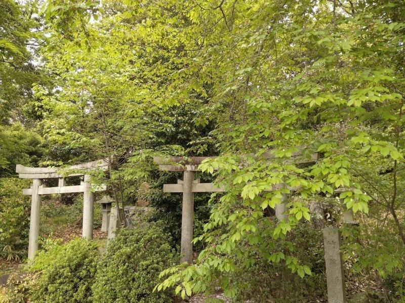 Green room Yoshida