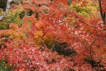 抬头满天红叶红似火