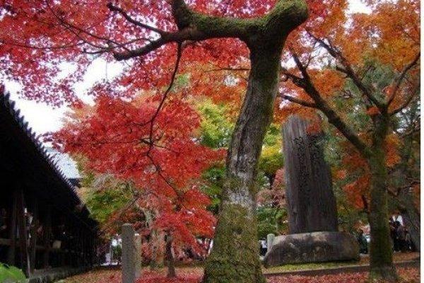 红叶与木碑