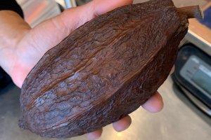 Dandelion Kuramae Production Manager Chieko Banno does workshops on cacao trade