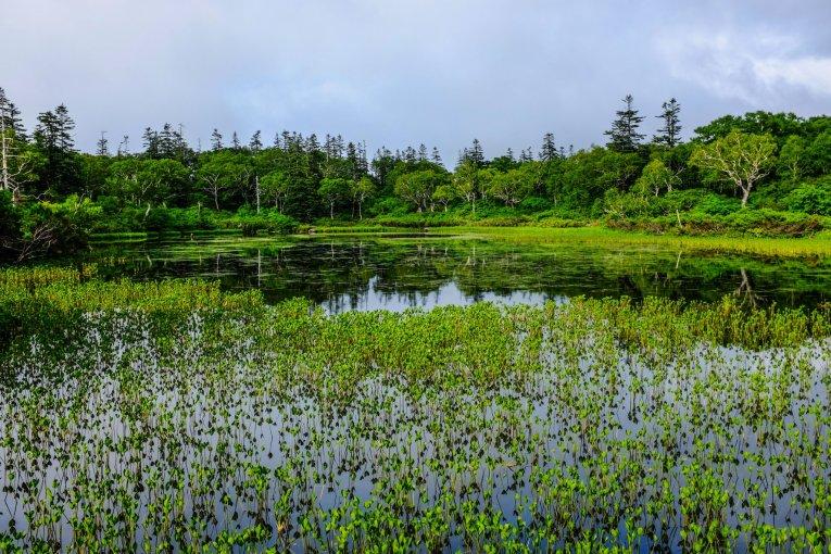 Shinsennuma Marsh