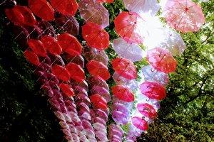 Vibrant red umbrellas