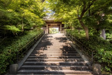Hydrangeas at Enkakuji Temple
