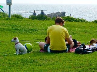 Con người và những chú chó tung tăng đến những điểm ưa thích của họ