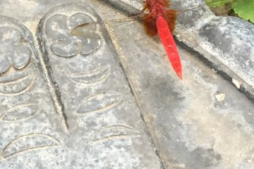 Aka-tombo. Somebody said this red dragonfly is the spirit of Kannon-sama