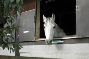 Menunggang kuda adalah atraksi yang populer di Aichi Bokujo