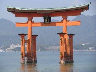 Знаменитые тории храма Ицукусима