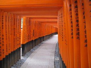 The corridor of thousands of wooden torii