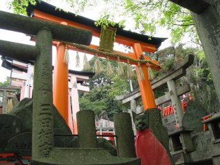 Many torii on the way to the top of Inari Mountain