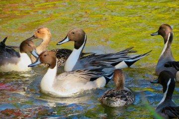 Shomyoji wildlife in November
