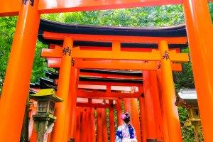Climbing Fushimi Inari