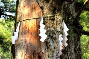 A sacred tree