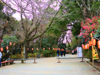 Shrine grounds during the New Year season