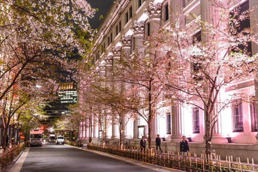 Sakura Light Up Mitsui Main Building