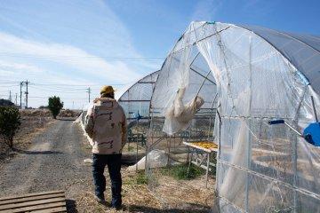 Touring the sweet potato farm at Nousanbutsu Kakou Konya