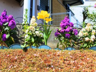 The flowers near the rotary