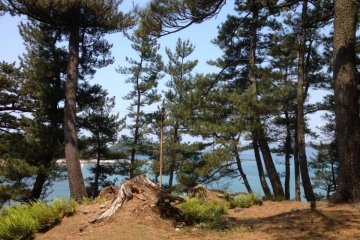 Pine trees cover the island