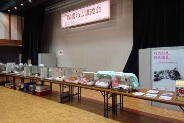 세이세키 네코 축제