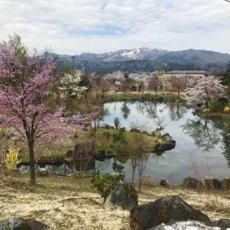 Zenibuchi Park Sakura Festival