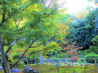 The temple grounds are full of nature