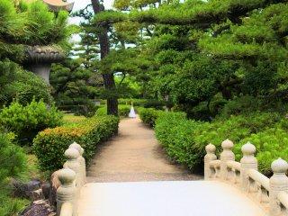 A splendid bridge and pine trees