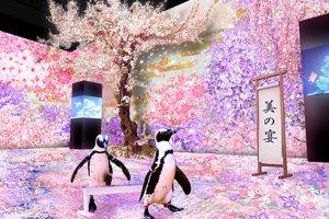 시나가와 아쿠아파크의 사쿠라 시즌 이벤트
