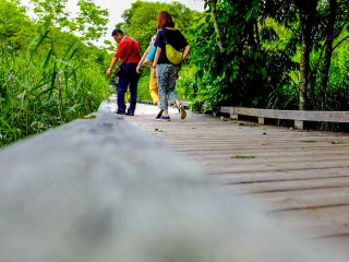 The wooden path sits inches above the wetland, allowing visitors to get up close and personal with the wetland