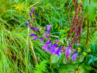 Beautiful summer colour surrounds the 3km path