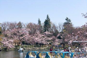 井之头公园的游船