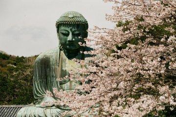 Kamakura's Great Buddha in Spring