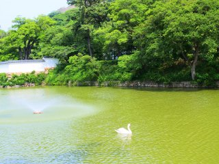A swan on the moat