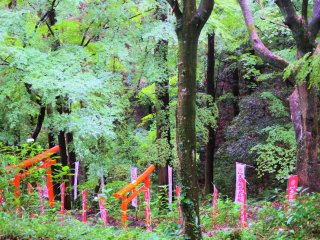 Torii within the shrine grounds